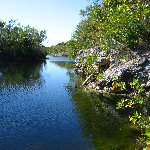 Dagny Johnson Botanical State Park - Key Largo, FL